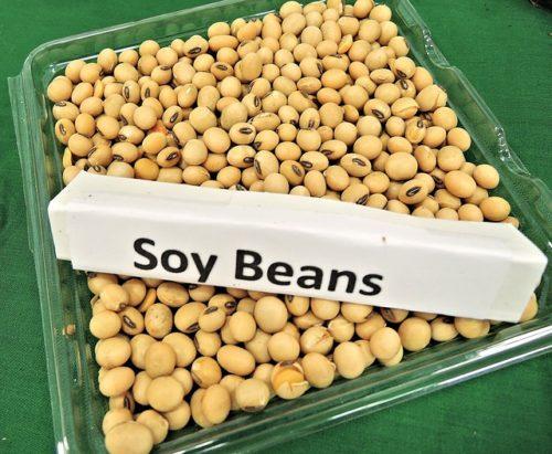 大豆soy-beans