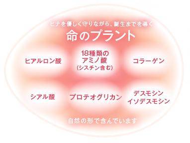 アルマード卵殻膜rankaku_secret_03