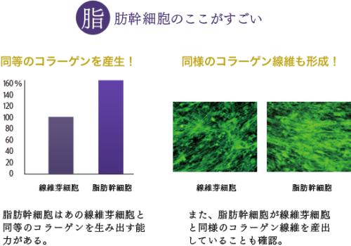 セルソース シグナリフト signalift 脂肪幹細胞