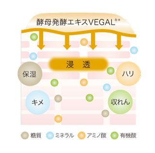 vegalImage02